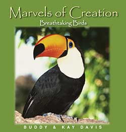 Breathtaking Birds Marvels of Creation.